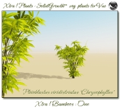 4_Xtra__Bamboos___One_a_Vue_107_4_img
