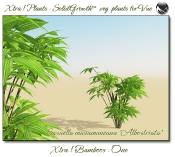 4_Xtra__Bamboos___One_a_Vue_107_6_img