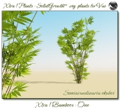 4_Xtra__Bamboos___One_a_Vue_107_7_img