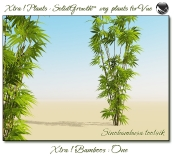 4_Xtra__Bamboos___One_a_Vue_107_8_img