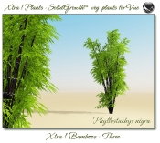 Xtra__Bamboos___Three__Vue_107_1_img