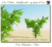 Xtra__Bamboos___Three__Vue_107_2_img