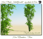 Xtra__Bamboos___Three__Vue_107_3_img