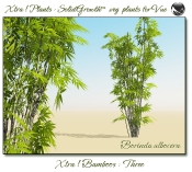 Xtra__Bamboos___Three__Vue_107_4_img