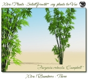 Xtra__Bamboos___Three__Vue_107_5_img