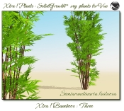 Xtra__Bamboos___Three__Vue_107_7_img
