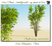 Xtra__Bamboos___Three__Vue_107_8_img