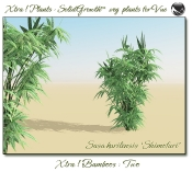 Xtra__Bamboos___Two_Vue_107_7_img