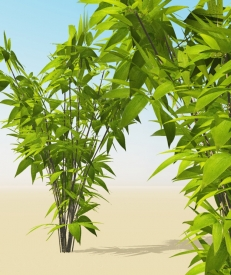 xtra-plants-bamboo-one