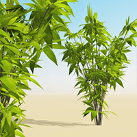 Xtra! Bamboos : One ! bundle of 8 SolidGrowth .veg plants for Vue