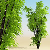 Xtra! Bamboos : Three ! bundle of 8 SolidGrowth .veg plants for Vue