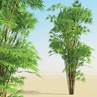 Xtra! Bamboos : Two – bundle of 8 SolidGrowth .veg plants for Vue
