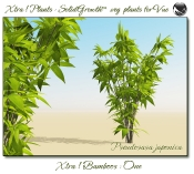 4_Xtra__Bamboos___One_a_Vue_107_1_img
