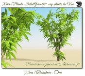 4_Xtra__Bamboos___One_a_Vue_107_2_img
