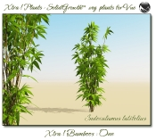 4_Xtra__Bamboos___One_a_Vue_107_3_img