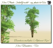 Xtra__Bamboos___Two_Vue_107_1_img