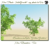 Xtra__Bamboos___Two_Vue_107_2_img