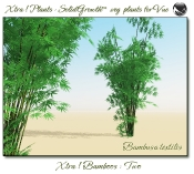 Xtra__Bamboos___Two_Vue_107_3_img