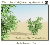Xtra__Bamboos___Two_Vue_107_5_img