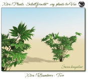 Xtra__Bamboos___Two_Vue_107_6_img