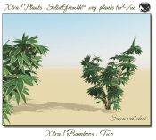 Xtra__Bamboos___Two_Vue_107_8_img